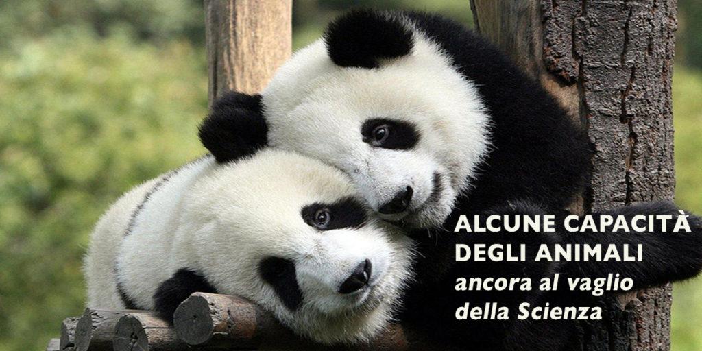 Abbraccio di Panda (Commons Wikimedia)